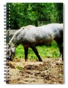 Appaloosa Eating Hay Spiral Notebook