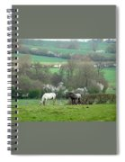 Appaloosa In May Spiral Notebook