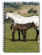 Appaloosa Mare And Foal Spiral Notebook