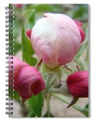 Apple Blossom Buds Art Prints Spring Baslee Troutman Spiral Notebook