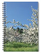 Apple Blossom Trees Norway Spiral Notebook