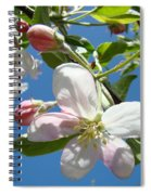 Apple Blossoms Art Prints Blue Sky Spring Baslee Troutman Spiral Notebook