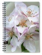 Apple Blossoms From My Hepburn Garden Spiral Notebook