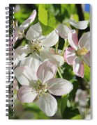 Apple Blossoms Square Spiral Notebook