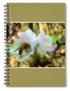 Apple Blossoms With Honey Bee Spiral Notebook