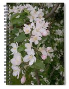 Apple Tree In Bloom Spiral Notebook