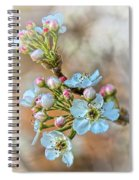 Apples In The Spring Spiral Notebook