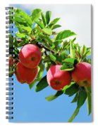 Apples On A Branch Spiral Notebook