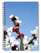 Apricot Blossoms Spiral Notebook
