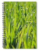 April Dewdrop Fairylights Spiral Notebook