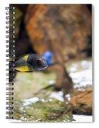 Aquarium Fish At Stones Arrangement Spiral Notebook