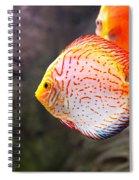 Aquarium Orange Spotted Fish Spiral Notebook