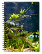 Aquarium Striped Fishes Group Spiral Notebook