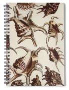 Aquatic Animals - Conch - Shells - Snails Spiral Notebook