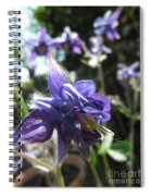 Aquilegia -  Columbine Spiral Notebook