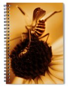 Arabesque - Gold Spiral Notebook