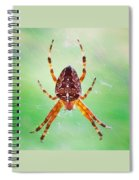 Arachnid Spiral Notebook
