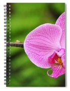Arboretum Tropical House Orchid Spiral Notebook
