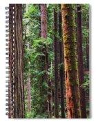 Arcata Forest Spiral Notebook