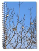 Arctic Buntings Spiral Notebook