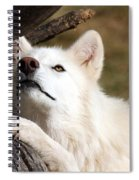 Arctic Curiosity Spiral Notebook