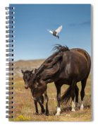 Arctic Tern Attacking Mare Spiral Notebook