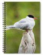 Arctic Tern Spiral Notebook