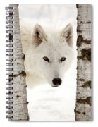 Arctic Wolf Seen Between Two Trees In Winter Spiral Notebook
