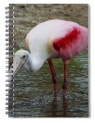 Are U Looking At Me Spiral Notebook
