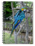 Arent I A Handsome Fellow - Blue And Gold Macaw Spiral Notebook