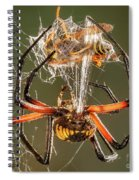 Argiope Spider Wrapping A Hornet Spiral Notebook