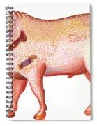 Aries The Ram Spiral Notebook