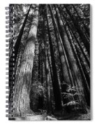 Armstrong National Park Redwoods Filtered Sun Black And White Spiral Notebook
