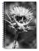 Artichoke Thistle Bw Spiral Notebook