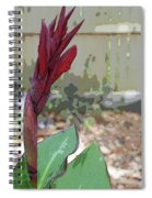 Artistic Red Canna Lily Spiral Notebook
