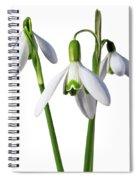Spring Springs Eternal Spiral Notebook