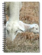 L Is For Lamb Spiral Notebook