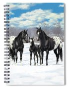 Black Appaloosa Horses In Winter Pasture Spiral Notebook