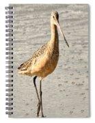 Sandpiper Strolling - Horizontal Spiral Notebook