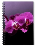 Pink Orchid Flowers Spiral Notebook