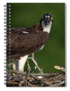 Osprey Portrait Spiral Notebook