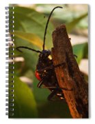 Asending Beetle Spiral Notebook