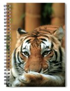 Asian Tiger 5 Spiral Notebook