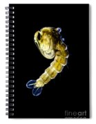Asian Tiger Mosquito Pupa Spiral Notebook