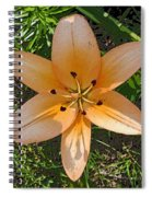 Asiatic Lily With Poster Edges Spiral Notebook