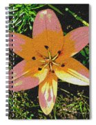 Asiatic Lily With Sandstone Texture Spiral Notebook