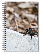 Asilid Resting Spiral Notebook