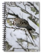 Asleep In The Snow - Mourning Dove Portrait Spiral Notebook