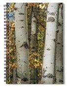 Aspen Bark Spiral Notebook