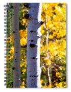 Aspen Color Spiral Notebook